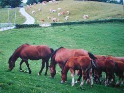 pferdemetzgerei beerwart waiblingen